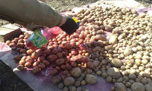 Обработка клубней картофеля перед посадкой