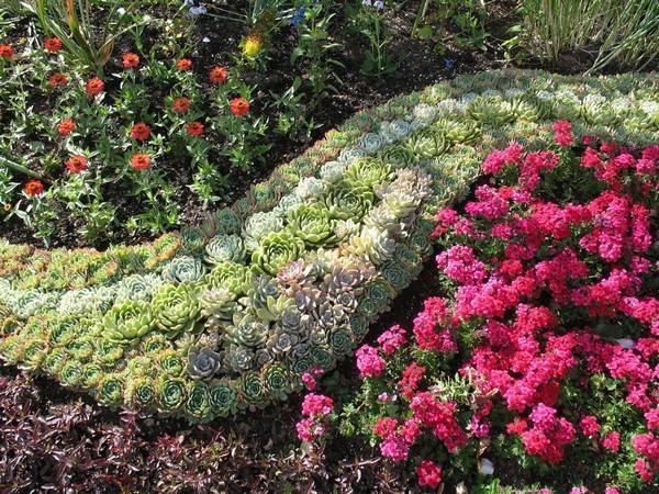 Седум выращивание из семян
