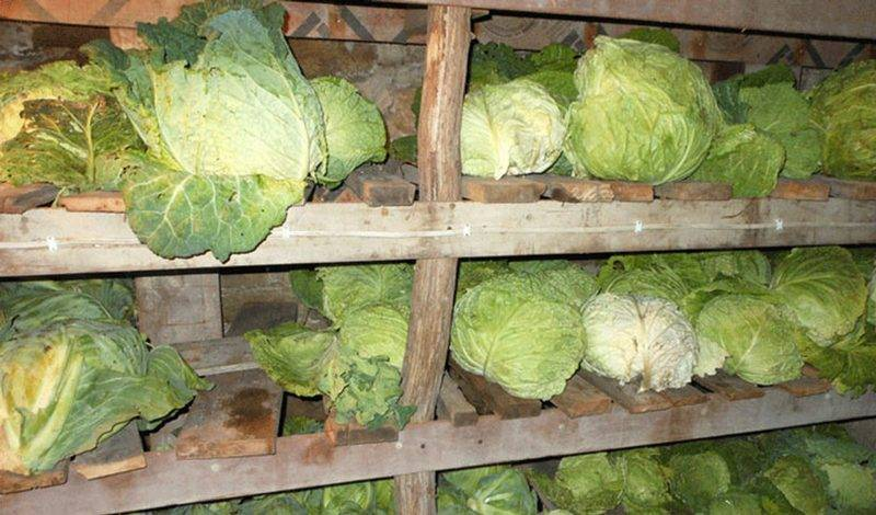 Как сохранить свежую капусту в квартире