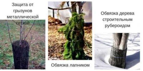 Осеннее опрыскивание плодовых деревьев медным купоросом