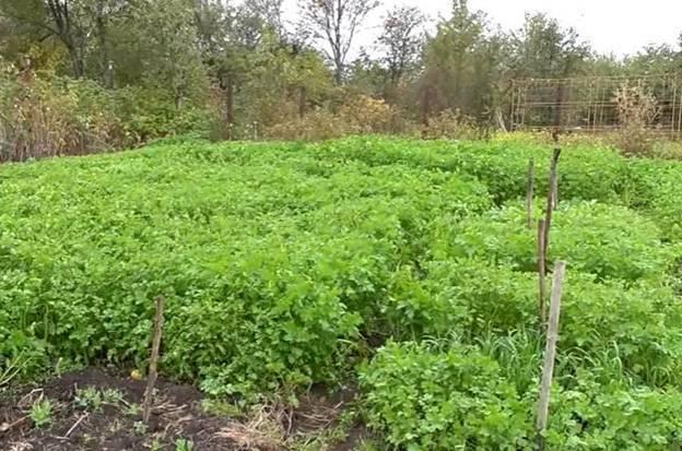 Осеннее удобрение для огорода