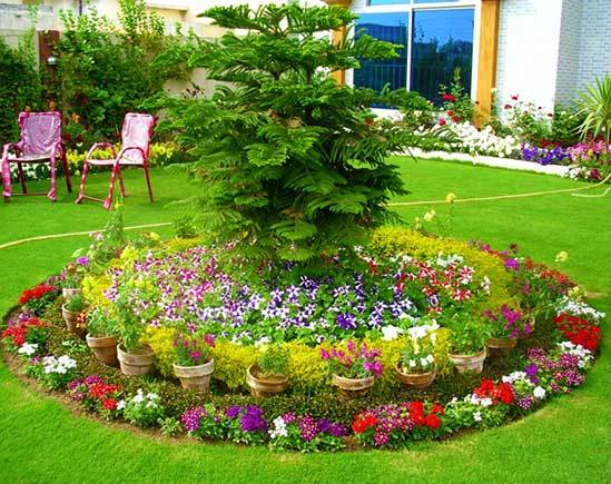 самые красивые цветники на даче фото сад и огород