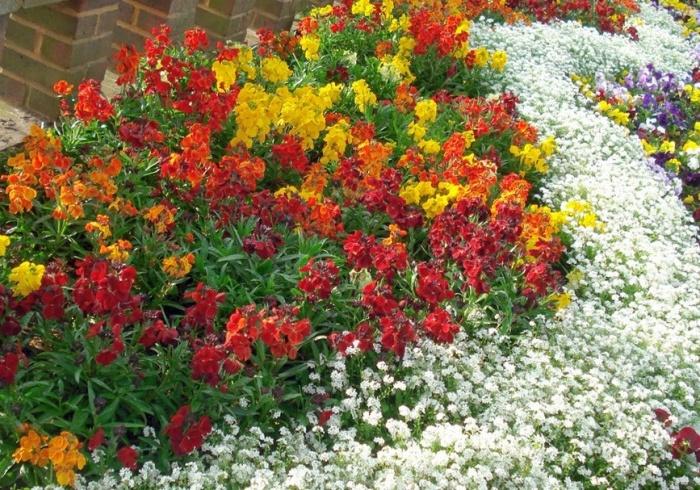 Самые красивые цветники на даче фото