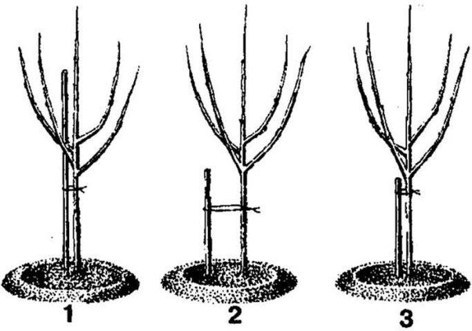 Посадка садовых деревьев осенью