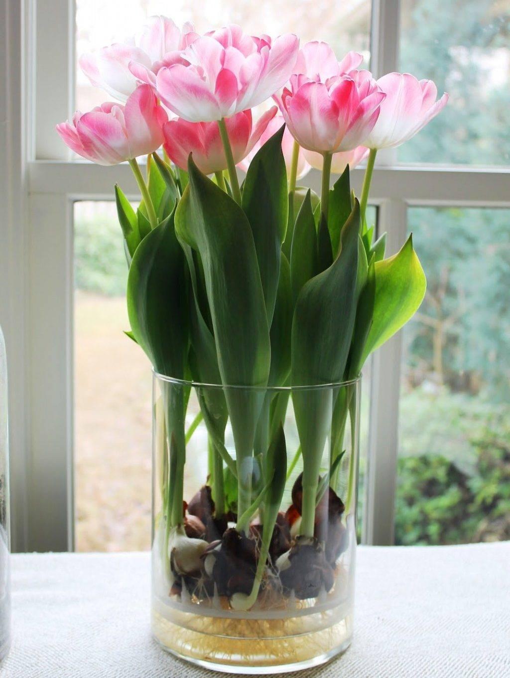 Тюльпаны зимой