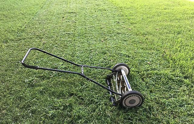 Посев газона под зиму