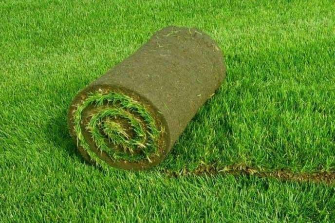Какие бывают газоны