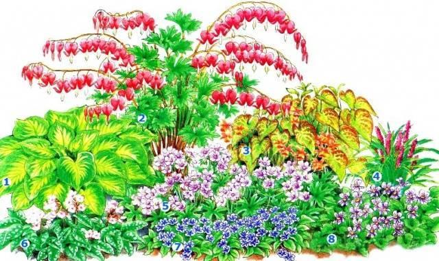 Создание клумбы непрерывного цветения