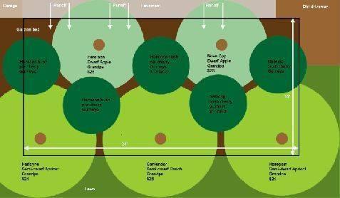 расстояние при посадке плодовых деревьев на участке