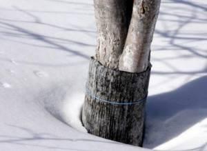 Обвязанные деревья