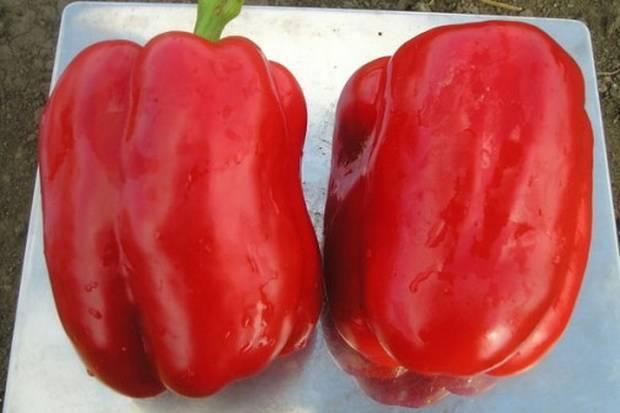 Лучшие семена перца сладкого толстостенного