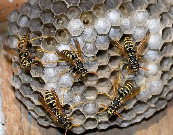 Помешкання франківців атакують агресивні комахи