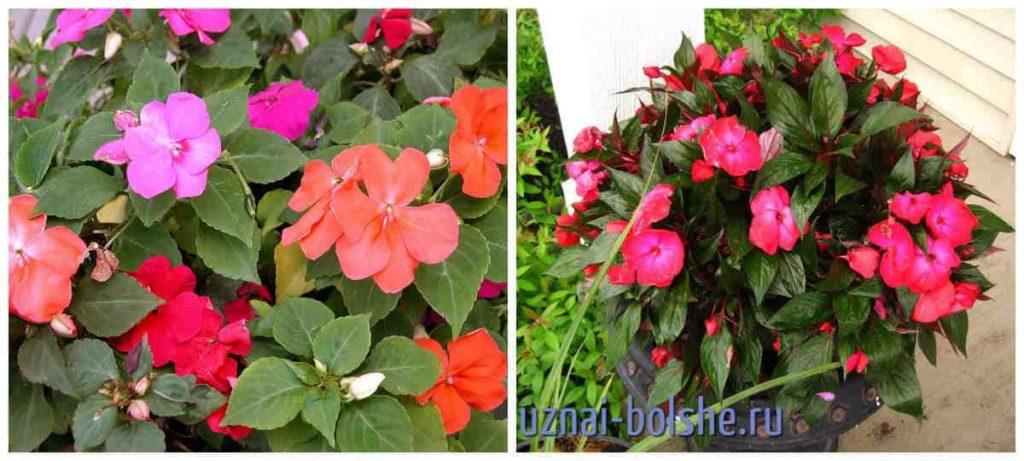 Красивые цветы в горшках фото