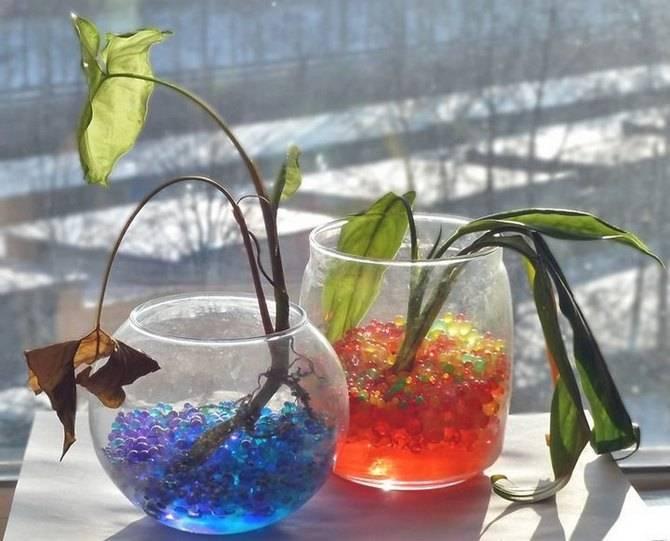 Гель для цветов вместо земли