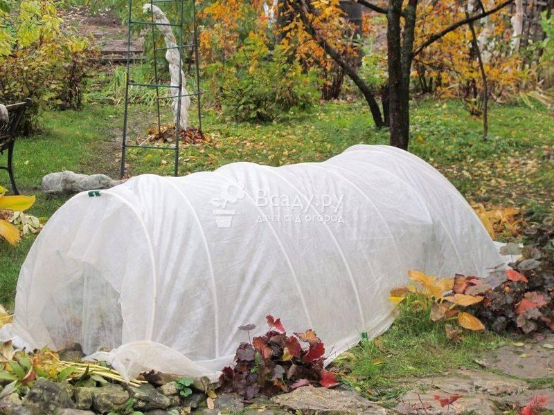 Гортензия в саду посадка и уход