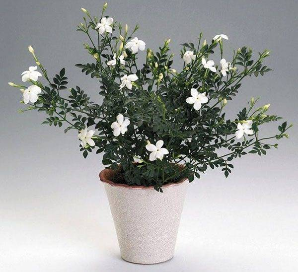 Цветок на длинном стебле