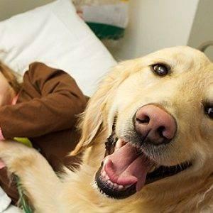 Породы собак для частного дома с детьми