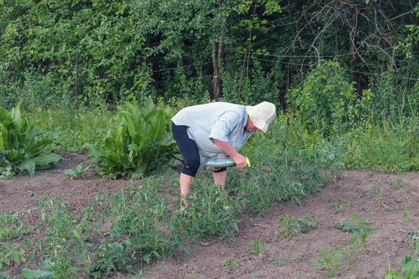 План посадки овощей на огороде схемы
