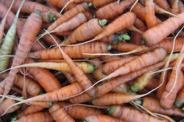 Почему у моркови белая сердцевина