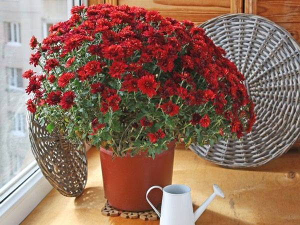 Цветы горшечные для дома
