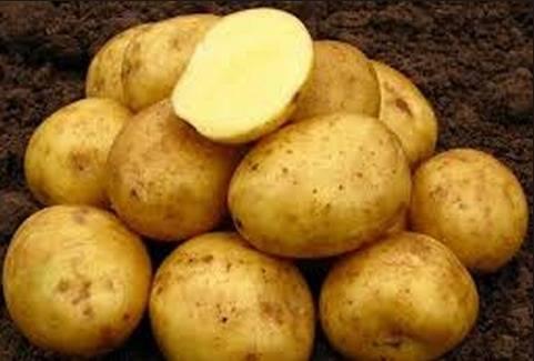 Разновидность картофеля