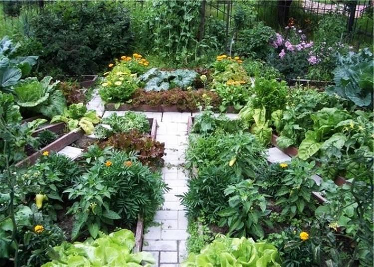 Как сделать красивый огород