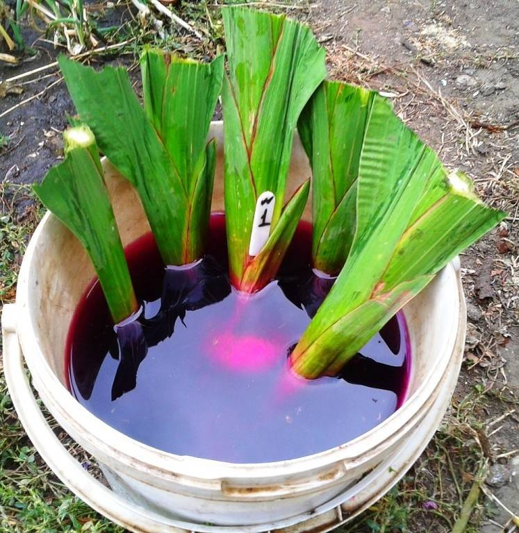 Как сохранить клубни гладиолусов до весны