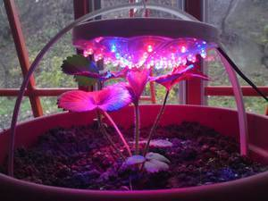 Светодиодные светильники для цветов комнатных