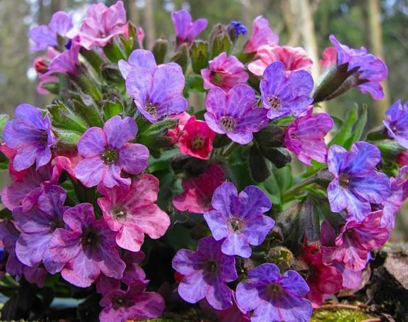 Какие цветы растут весной