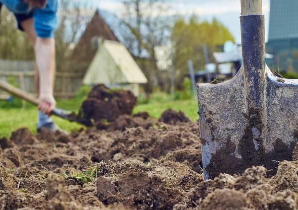 Минерализация и избавление земельного участка от сорняков и вредителей