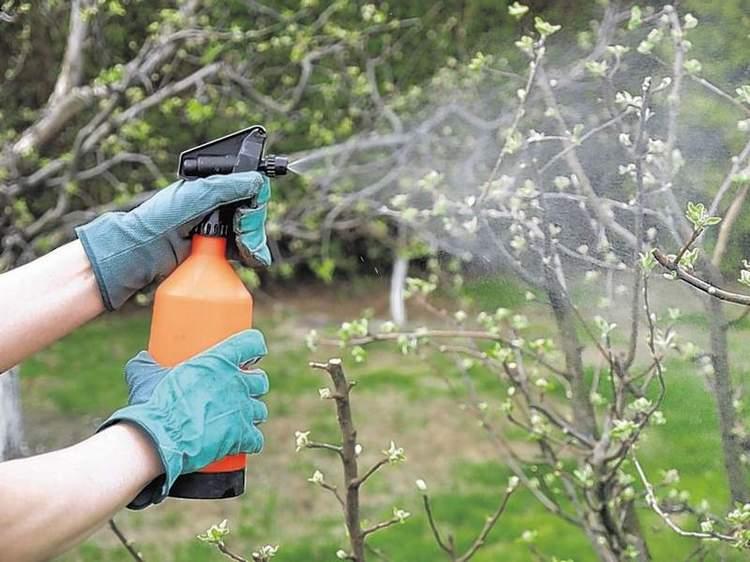 Удобрение борная кислота применение