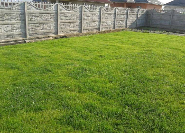 Трава полевица побегоносная фото