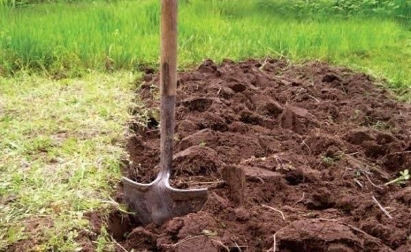 Как обеззаразить землю для рассады