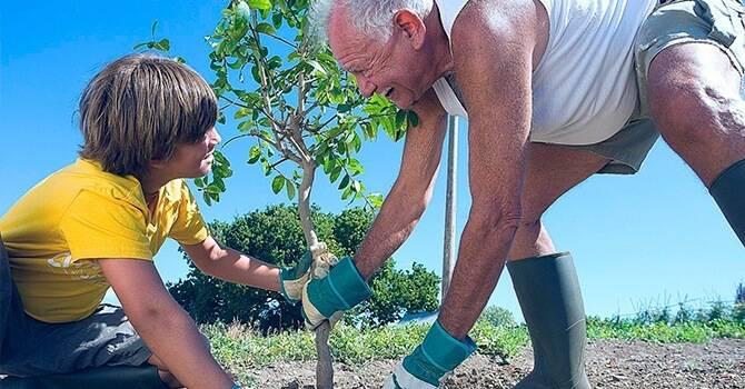 Осенняя прививка плодовых деревьев