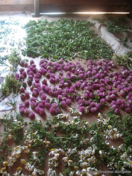 Полезные травяные чаи на каждый день