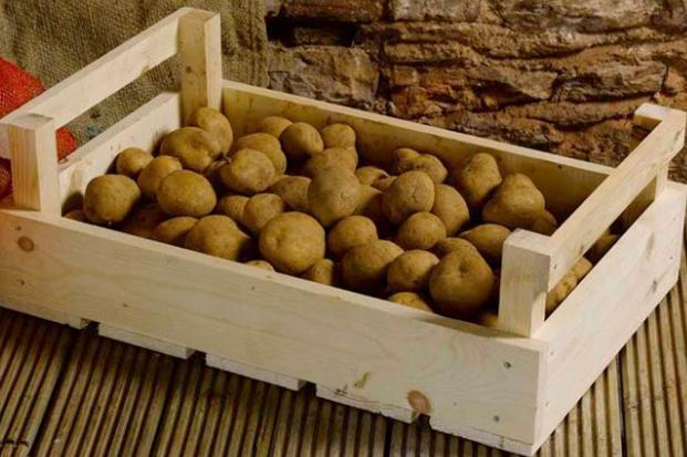 Почему гниет картошка в погребе