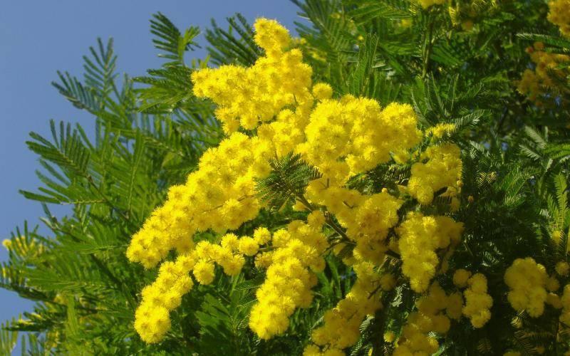 Гороскоп цветов по знакам зодиака