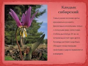 Что цветет весной