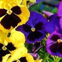 Какие цветы хорошо растут в тени