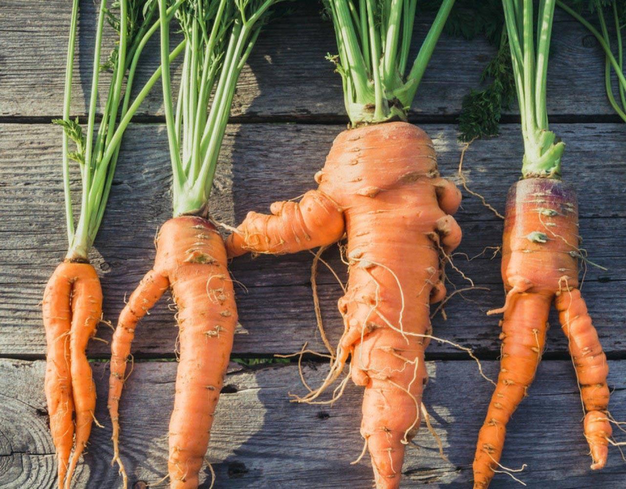 Схема посадки моркови на грядке