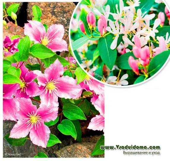 Растения средиземноморья