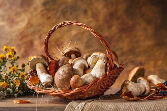 При какой температуре растут грибы осенью