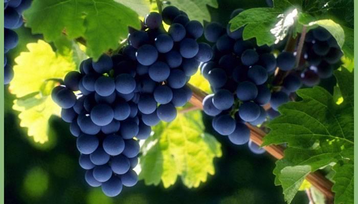Плодово ягодные кустарники фото и названия