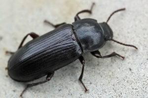 Черные жуки в доме ночью
