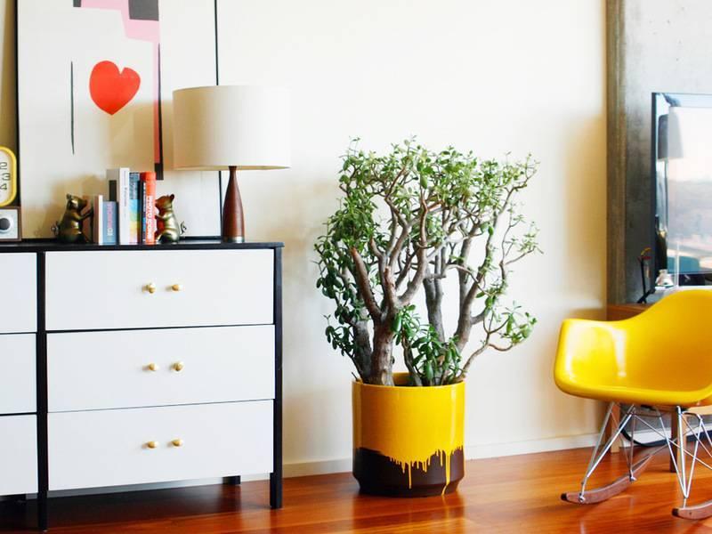 Комнатные цветы в интерьере дома фото