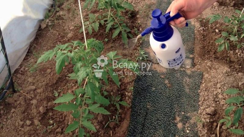 Пищевая сода в огороде применение