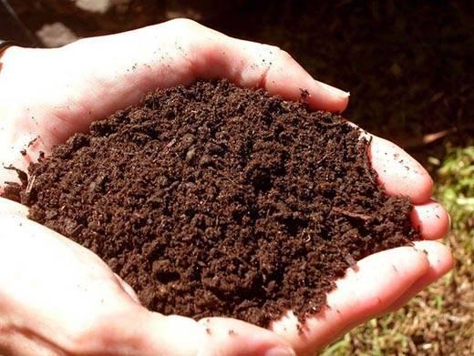 Какой состав имеет почва