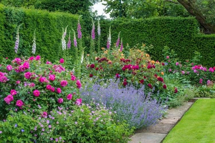 Розы в саду дизайн фото