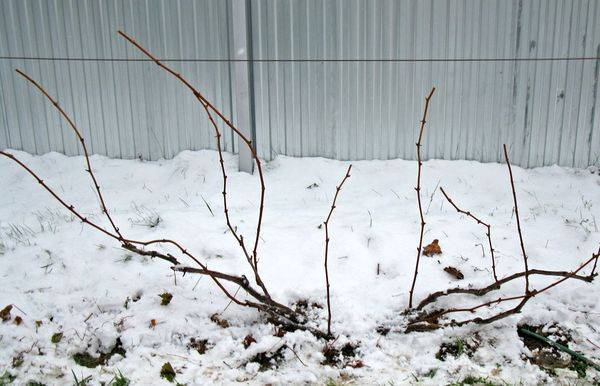 Обрезка винограда в зиму видео