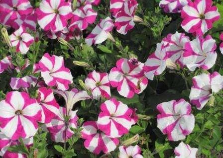 Красивые цветники на приусадебном участке фото
